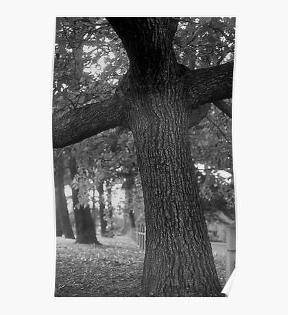 Cross Tree Poster