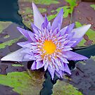 New Orleans Water Lily by Briar Richard