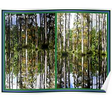Mirror Images, Cypress Trees Poster