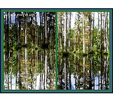 Mirror Images, Cypress Trees Photographic Print