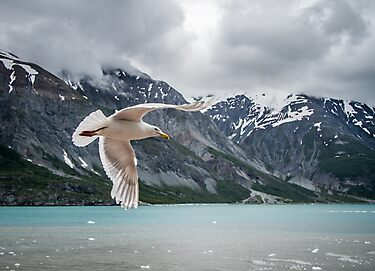Glacier Bay Fly By by Randy Turnbow