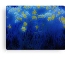 Narcisos (Daffodils) Canvas Print