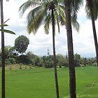 Beautiful Green Field in Philippines by Kim Vaughn Sowards