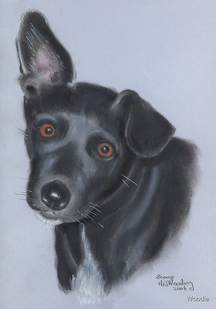 Scamp in pastels by Woodie