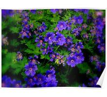 Blooming purple... Poster