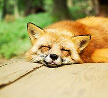 Fox by franceslewis