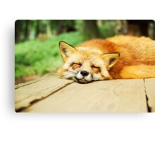 Fox Canvas Print