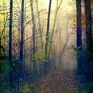 Wandering in a Foggy Woodland by Olivia Joy StClaire