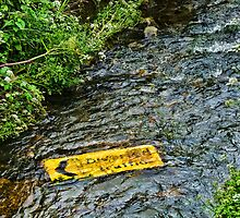 Upstream Closed ~ All Ducks Please Turn Left  :) by Susie Peek