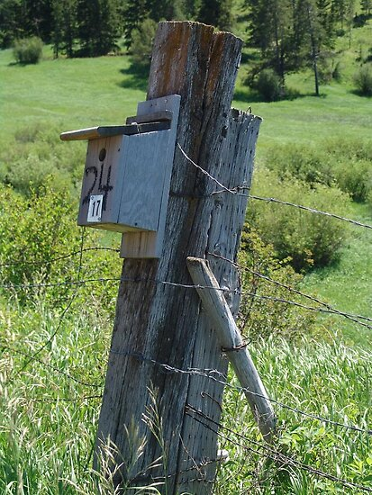 BLUEBIRD HOUSE NEAR BOZEMAN, MT by May Lattanzio