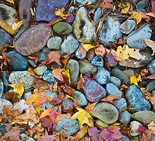 Pieces of Fall by clare winslow