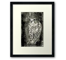Kestrel in B&W Framed Print