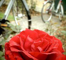 Munich Rose by Sarah Maria B