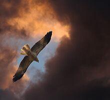 Heavenly Kite by byronbackyard