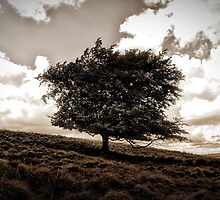 The Lonesome Tree by christof1395