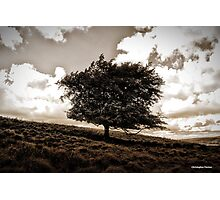 The Lonesome Tree Photographic Print