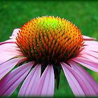 Full Cone Flower by PatChristensen
