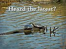 Heard the Latest Hello Hi Greeting Card - Painted Turtles by MotherNature