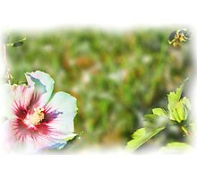 Bumble Bee In Flight EX Photographic Print