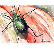 Green Carab Beetle Photographic Print
