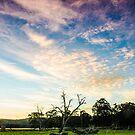 Serpentine Field by Jonathan Trimble