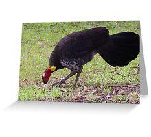 Australian Brush-turkey (jc) Greeting Card
