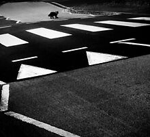 black cat crossing by Dorit Fuhg
