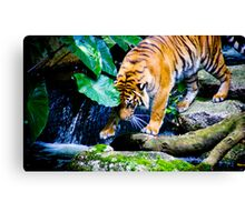 Melbourne Zoo Canvas Print