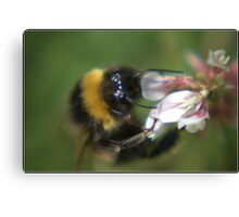 Bumble Bee In Clover Canvas Print