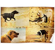 Canine Adventures Poster