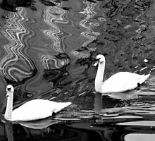 Swan Lake by Jo-Lou