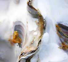 oyster by Richard George