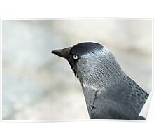 City Jackdaw Poster