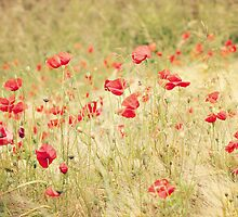 Lissome  - slender and graceful poppies by Rosie Nixon