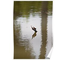Eastern Painted Turtle with Dragonfly Poster