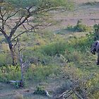 African Elephant from a hot-air balloon by Keith Davey