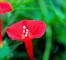 Cypress Flower by aprilann