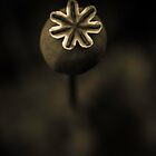 Poppy Seed Head by alan shapiro