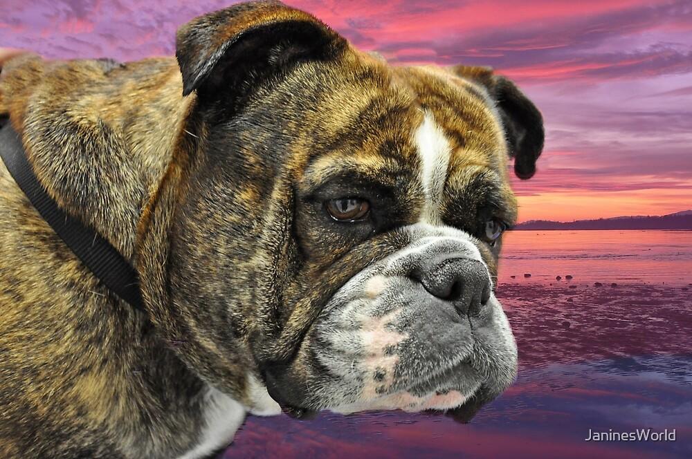 British Bulldog by JaninesWorld
