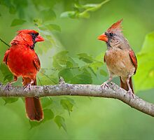 The babies have flown the coop and we have time for each other . . . by Bonnie T.  Barry