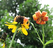 Swamp sunflower & Turk's cap lily by Mike Shell