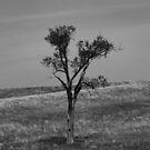 Prairie Tree by Carrie Bonham