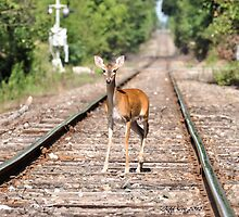Deer on the Tracks by Jeff Ore