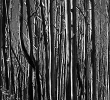 Untitled- Mt Sterling Trees by claire-virgona
