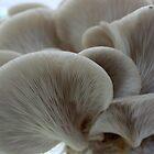 Mushrooms by Kelley Shannon