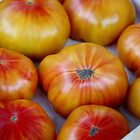 Tomatoes  by Kelley Shannon