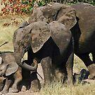 Family bonding! by jozi1