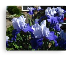 Blue petal fun Canvas Print