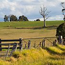 ON the Farm by Judith Cahill