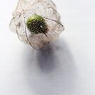 The Green Gooseberry by Michelle Cocking